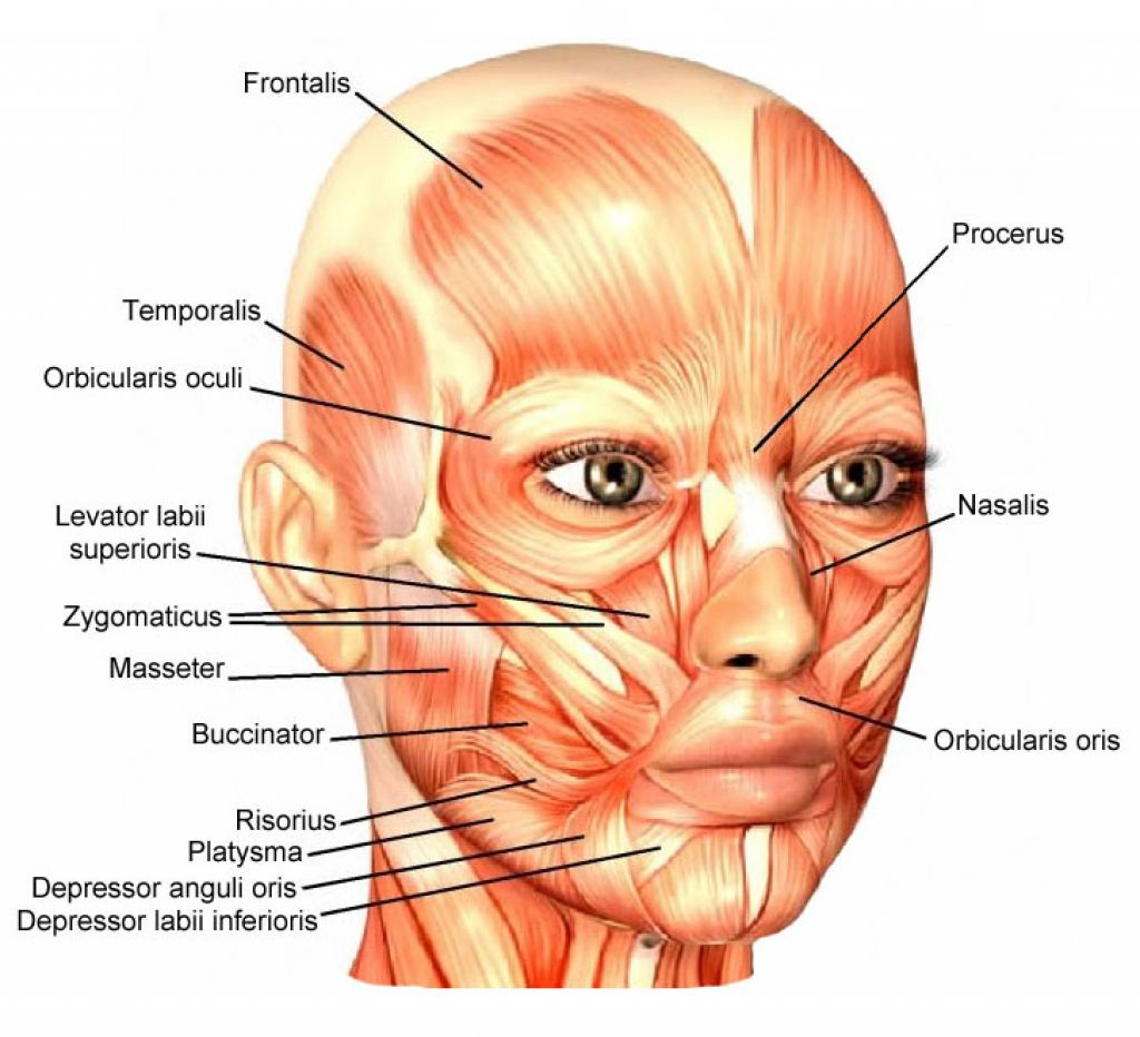 muscles-of-the-face-labeled-face-muscle-diagram-labeled-label-the-muscles-of-the-face-face.jpg